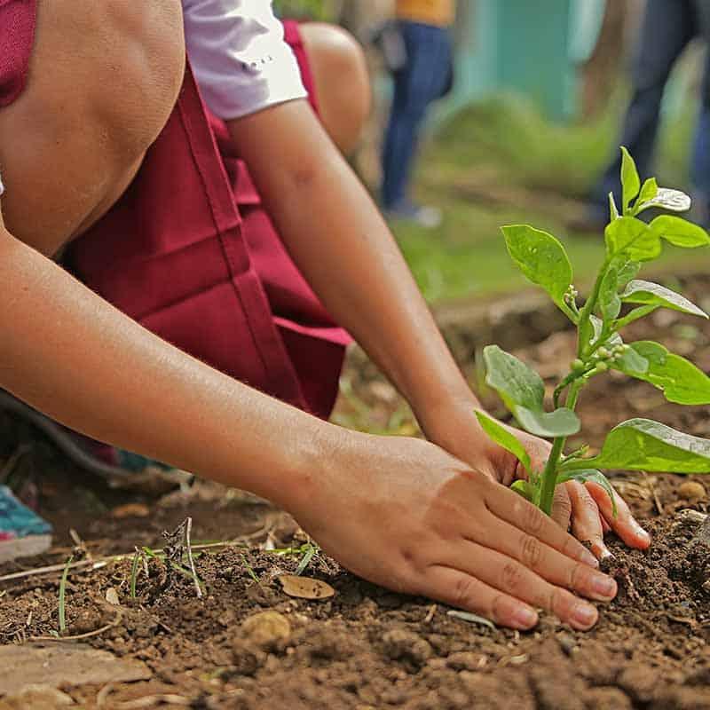 Ecosafe Green | Zero waste- Compost soil amendment