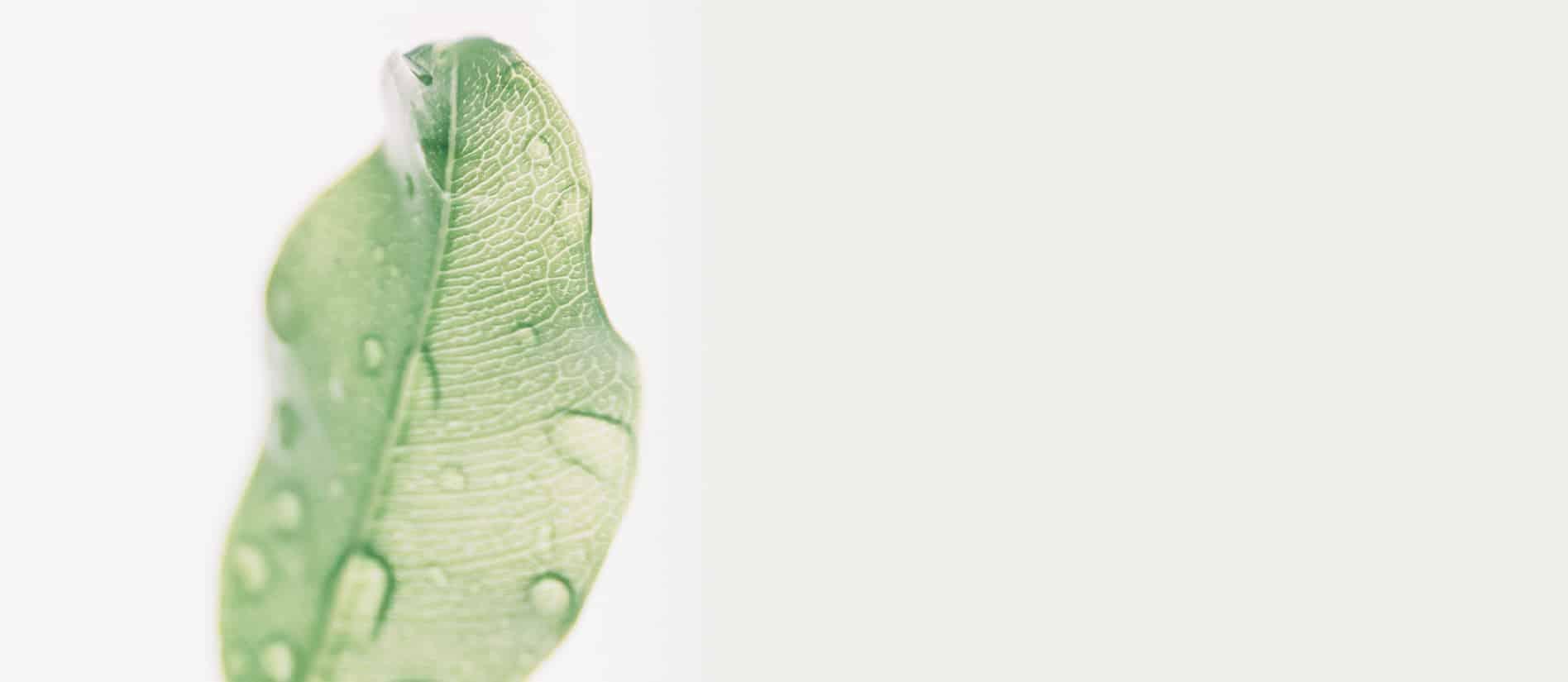 Ecosafe Green   Zero waste - leaf