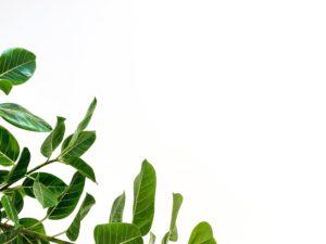 Ecosafe Green | Zero waste - leaves