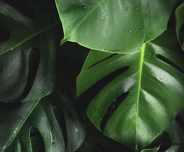 Ecosafe Green   Zero waste - plant leaves