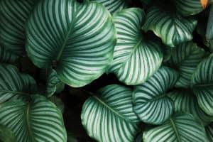 Ecosafe Green | Zero waste - plant leaves