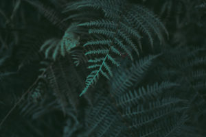 Ecosafe Green   Zero waste - fern