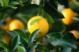 Ecosafe Green | Zero waste - lemons