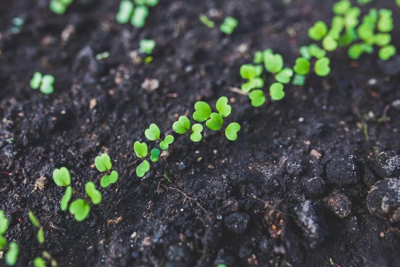 Ecosafe Green | Zero waste - weeds