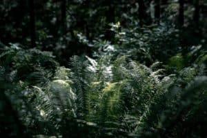 Ecosafe Green | Zero waste - shrub