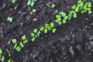 Ecosafe Green   Zero waste - weeds